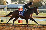 Four Wheel Drive, trained by trainer Wesley A. Ward, exercises in preparation for the Breeders' Cup Turf Sprint at Keeneland Racetrack in Lexington, Kentucky on October 31, 2020.
