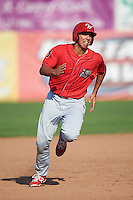 Williamsport Crosscutters first baseman Darick Hall (46) running the bases during a game against the Auburn Doubledays on June 26, 2016 at Falcon Park in Auburn, New York.  Auburn defeated Williamsport 3-1.  (Mike Janes/Four Seam Images)