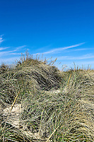 Dune path leading to the beach, Cape Cod Bay, Crosby Beach