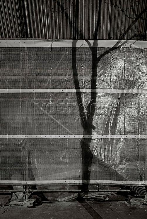 Paris, Tree Shadow, Baumschatten, Baum, 31.01.2014<br /> <br /> <br /> <br /> <br /> ***HIGHRES AUF ANFRAGE*** ***VOE NUR NACH RUECKSPRACHE***<br />  ***Keine Social_Media Nutzung***<br /> <br /> Engl.: Europe, France, Paris, Tree Shadow, shadows, trees, tree, building site, 31 January 2014<br /> ***HIGHRES ON REQUEST***PUBLICATION ONLY AFTER CONSULTATION WITH LAIF***<br /> ***No social media use***
