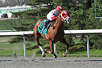 27 March 2010: Dean's Kitten with Cornelio Velasquez up takes the 39th running of the G2 Lane's End Stakes at Turfway Park in Florence, Kentucky.