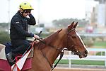 RIYADH, SA February 19 2021: Track work from King Abddulaziz Racetrack, Riyadh, Saudi Arabia. Shamela Hanley/Eclipse Sportswire/CSM