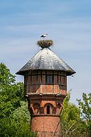 Junge Weißstörche (Ciconia ciconia) im Nest auf dem Dach eines Wasserturms im Dorf Rühstädt, Europäisches Storchendorf, Prignitz, Brandenburg, Deutschland