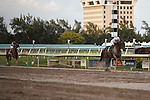 Ron the Greek with Jose Lezcano up runs away with the Florida Sunshine Millions Classic at Gulfstream Park.  Hallandale Beach Florida. 01-19-2013