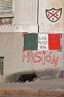 a wall with graffiti, one word spelling Pasion, passion, a black cat walking on the pavement Montevideo, Uruguay, South America
