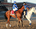 Siete de Oros post parade. Favorite Vyjack with Cornelio Velasquez holds off 41 - 1 longshot Siete de Oros to win143rd running of the Grade II Jerome Stakes for 3-year olds, going 1 mile 70 yards on the inner dirt, at Aqueduct Racetrack.  Trainer Rudy Rodriguez.  Owner Pick Six Racing **