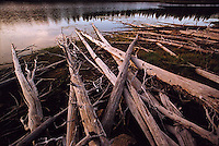 Felled trees by side of lake<br />