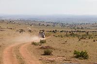 Tanzania. Road, Serengeti National Park.