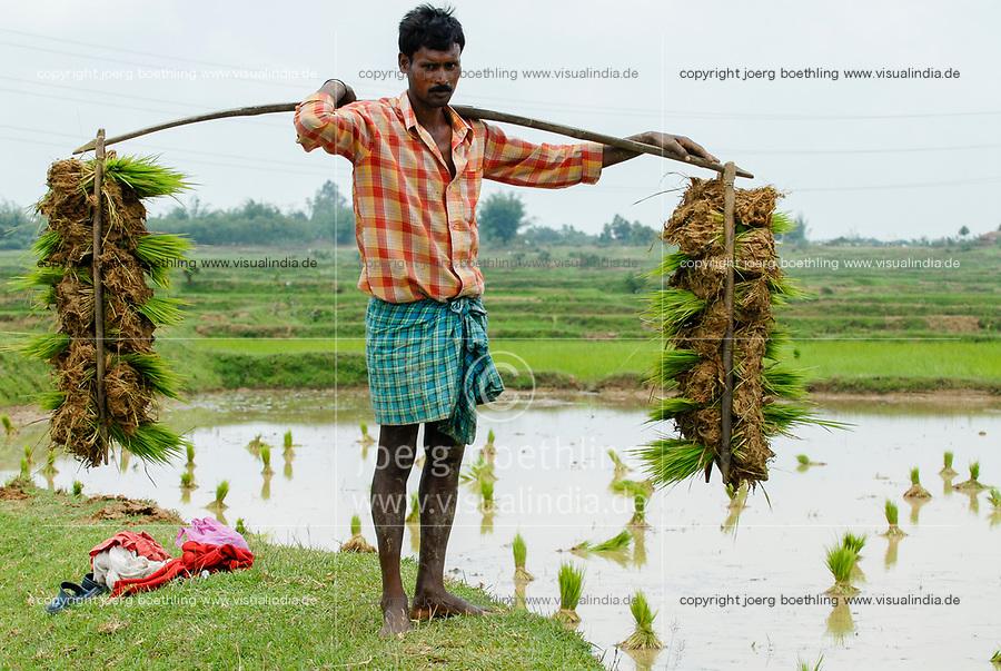 INDIA Westbengal, village Gandhiji Songha , paddy cultivation, replanting of rice seedlings / INDIEN Westbengalen , Dorf Gandhiji Songha , Landwirtschaft, Umpflanzen von Reissetzlingen