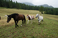 Le Temps, San Gion Scuol, Ranch, Saloon, Equitation SAN GION SCUOL, Le Temps