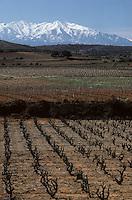 Europe/France/Languedoc-Roussillon/66/Pyrénées -Orientales/Env de Riversaltes : Vignoble et massif du Canigou