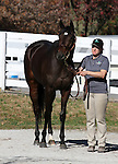 Hip #427 Royal Delta winner of the 2011 Breeders' Cup Ladies Classic on Friday night will be sold as hip #427 on Tuesday in the Keeneland November Sale.   November 6, 2011.