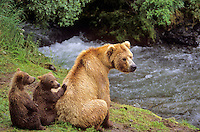 Brown bears, mother with young cubs at Brooks Falls on Brooks River, Katmai National Park, Alaska, AGPix_0189.
