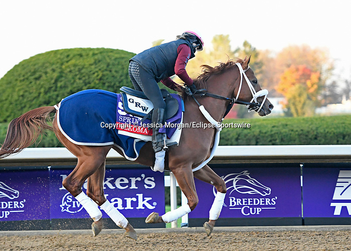 November 3, 2020: Jessica Morgan/Eclipse Sportswire/Breeders Cup: Vekoma, trained by trainer George Weaver, exercises in preparation for the Breeders' Cup Sprint at Keeneland Racetrack in Lexington, Kentucky on November 3, 2020.