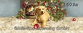 Dona Gelsinger, CHRISTMAS ANIMALS, WEIHNACHTEN TIERE, NAVIDAD ANIMALES, paintings+++++,USGE1609A,#xa#,cat,fireplace