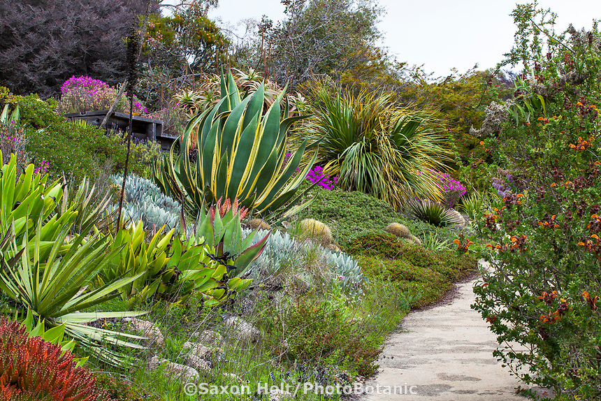 Large, wide succulent border at University Of California Santa Cruz Arboretum And Botanic Garden