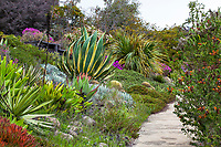 Large, wide succulent border at University Of California Santa Cruz Arboretum And Botanic Garden