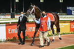 MARCH 27, 2021: AJUSTE FISCAL (URU) #1, in the post parade for the Dubai World Cup at Meydan Racecourse, Dubai, UAE. Shamela Hanley/Eclipse Sportswire/CSM