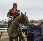 November 28, 2015:   Tonalist with John Velazquez wins the Grade I Cigar Mile Handicap for 3-year olds & up, going 1 mile at Belmont Park.  Trainer Christophe Clement. Owner Robert Evans. Sue Kawczynski/ESW/CSM