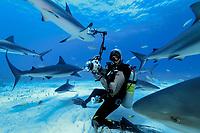 Caribbean reef shark, Carcharhinus perezii, and diver, Bahamas, Atlantic Ocean