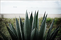 "Agave<br /> From ""Color Blind"" series. Miami, 2009"