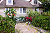 Brugmansia, cabbage vegetables, petunias, Miscanthus ornamental grass, boxwood Buxus shrubs, brick walkway path, Helianthus flowers, with house