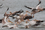 BIRD FLOCKS