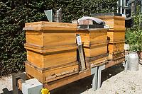 """Honigernte bei den Bundestags-Bienen.<br /> Oliver Krischer, """"Bienen-Vater"""" des Parlaments und Vizechef der Bundestagsfraktion der Gruenen erntete zusammen mit seinem Mitarbeiter Daniel Holstein und dem Imker Dr. Benedikt Polaczeck von der Technischen Universitaet, am Dienstag den 7. August 2018 im Paul-Loebe-Haus den Honig der Bundestagsbienen. Insgesamt wird eine Ernte von bis zu 100 Kilogramm von den drei Bienenvoelkern erwartet.<br /> Die Bienenvoelker wurden 2016 als Zeichen gegen das Bienensterben von der gruenen Bundestagsabgeordneten Baerbel Hoehn aufgestellt.<br /> Im Bild: Die drei Bienenvoelker Sylvia, Katrin und Annalena (vlnr.).<br /> 7.8.2018, Berlin<br /> Copyright: Christian-Ditsch.de<br /> [Inhaltsveraendernde Manipulation des Fotos nur nach ausdruecklicher Genehmigung des Fotografen. Vereinbarungen ueber Abtretung von Persoenlichkeitsrechten/Model Release der abgebildeten Person/Personen liegen nicht vor. NO MODEL RELEASE! Nur fuer Redaktionelle Zwecke. Don't publish without copyright Christian-Ditsch.de, Veroeffentlichung nur mit Fotografennennung, sowie gegen Honorar, MwSt. und Beleg. Konto: I N G - D i B a, IBAN DE58500105175400192269, BIC INGDDEFFXXX, Kontakt: post@christian-ditsch.de<br /> Bei der Bearbeitung der Dateiinformationen darf die Urheberkennzeichnung in den EXIF- und  IPTC-Daten nicht entfernt werden, diese sind in digitalen Medien nach §95c UrhG rechtlich geschuetzt. Der Urhebervermerk wird gemaess §13 UrhG verlangt.]"""