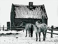Pferde in der Marsch bei Wedel, Schleswig-Holstein, Deutschland 1976