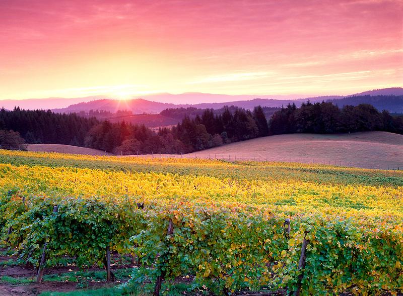 Sunrise and Alpine Vineyards. Near Alpine, Oregon.