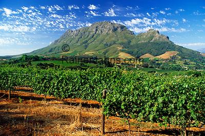 South Africa, Cape Town, Winelands, Stellenbosch, wine growing estate Delaire