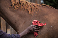 A syce grooming a horse after training at Ngong Racecourse in Nairobi, Kenya. March 14, 2013. Photo: Brendan Bannon