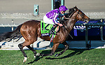 ARCADIA, CA - NOVEMBER 05: Highland Reel #12, ridden by Seamus Heffernan, wins Longines Breeders' Cup Turf during day two of the 2016 Breeders' Cup World Championships at Santa Anita Park on November 5, 2016 in Arcadia, California. (Photo by Michael McInally/Eclipse Sportswire/Breeders Cup)