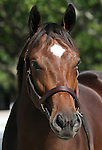 Hip #84 Galileo - Egyptian Queen at the  Keeneland September Yearling Sale.  September 9, 2012.