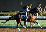 ARCADIA, CA - NOV 02: Ralis, owned by Reddam Racing, LLC and trained by Doug F. O'Neill, exercises in preparation for the Breeders' Cup Longines Turf at Santa Anita Park on November 2, 2016 in Arcadia, California. (Photo by Douglas DeFelice/Eclipse Sportswire/Breeders Cup)