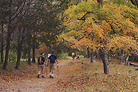 Hikers at Lost Maples Trail and Bigtooth Maples (Acer grandidentatum) , Lost Maples State Park, Texas, USA, November 2005
