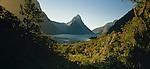 Sunlit forest and Mitre Peak in Milford Sound. Fiordland National Park.
