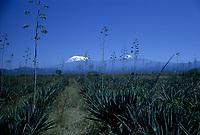 Mont Kilimandjaro, Tanzanie<br /> <br /> (date inconnue)<br /> <br /> PHOTO : Michel Faugere Publiphoto- Agence Quebec Presse