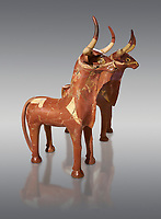 Terra cotta ritual bull pots, probably of Hurri & Serri, the bulls of Teshup the Storm God. produced as pairs only differing in the direction of their tails, the spouts on their backs indicate that they were offering vessels- 16th century BC - Hattusa ( Bogazkoy ) - Museum of Anatolian Civilisations, Ankara, Turkey