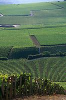 Europe/France/Champagne-Ardenne/51/Marne/Ay: Le vignoble champenois de la vallée de la Marne