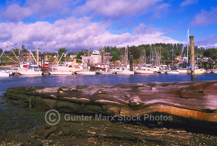 Queen Charlotte Islands (Haida Gwaii), Northern BC, British Columbia, Canada - Commercial Fishing Boats docked at Marina in Masset Harbour, Graham Island, Low Tide