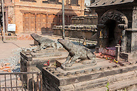 Nepal, Patan.  Two Shrews (transport of Lord Ganesha) at a Shrine.