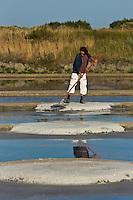 Europe/France/Pays de la Loire/44/Loire Atlantique/Guérande: Les marais salants de Guérande - Récolte de la fleur de sel - Récolte de la fleur de sel -  AUTO N°: 2012- 429