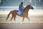 HALLANDALE BEACH, FL - JANUARY 21: California Chrome with exercise rider Dhigi Gladney warming up on the track before their final work in preparation for the Pegasus World Cup at Gulfstream Park. (Photo by Arron Haggart/Eclipse Sportswire/Getty Images