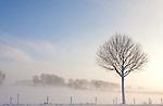 Europa, DEU, Deutschland, Nordrhein Westfalen, NRW, Rheinland, Niederrhein, Wesel-Ginderich, Schnee, Winter, Nebel, Bodennebel, Baeume, Kategorien und Themen, Natur, Umwelt, Landschaft, Jahreszeiten, Stimmungen, Landschaftsfotografie, Landschaften, Landschaftsphoto, Landschaftsphotographie, Natur, Naturfoto, Naturfotos, Naturfotografie, Naturphoto, Naturphotographie, Landschaft, Landschaften, Landschaftsfoto, Landschaftsfotografie, Landschaftsphoto, Landschaftsphotographie<br /> <br /> [Fuer die Nutzung gelten die jeweils gueltigen Allgemeinen Liefer-und Geschaeftsbedingungen. Nutzung nur gegen Verwendungsmeldung und Nachweis. Download der AGB unter http://www.image-box.com oder werden auf Anfrage zugesendet. Freigabe ist vorher erforderlich. Jede Nutzung des Fotos ist honorarpflichtig gemaess derzeit gueltiger MFM Liste - Kontakt, Uwe Schmid-Fotografie, Duisburg, Tel. (+49).2065.677997, <br /> archiv@image-box.com, www.image-box.com]