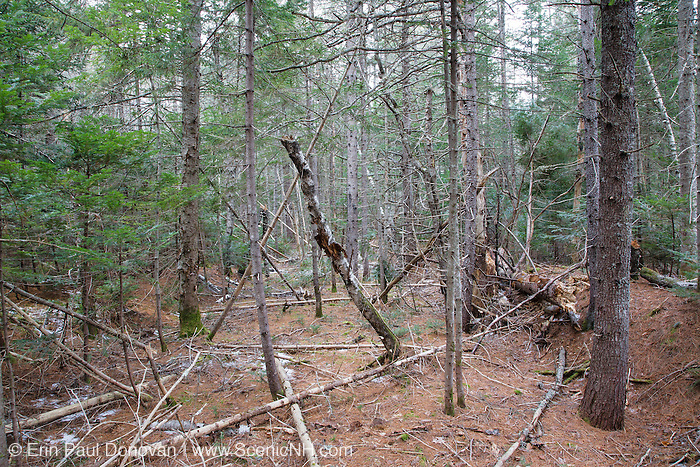Remnants of the old Swift River Railroad bed in Albany, New Hampshire USA. This was a logging railroad in operation from 1906 - 1916.
