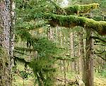 Temperate rainforest, Tongass National Forest, Alaska
