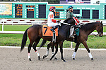 January 16, 2016: International Star with Miguel Mena up in the Louisiana Stakes race at the Fairgrounds race course in New Orleans Louisiana. Steve Dalmado/ESW/CSM