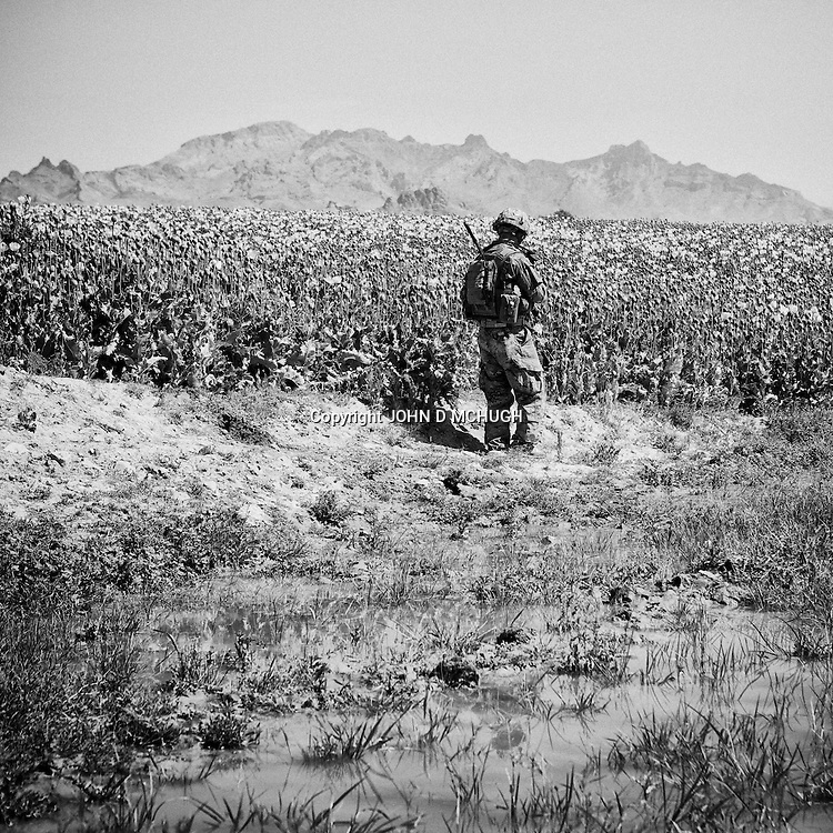 SSG Knight from 1 Platoon, Delta Co, 1-66, 4th Infantry Division, searches for arms caches and IEDs around Jazah village in the  Arghandab Valley, Kandahar, 03 May 2011. (John D McHugh)