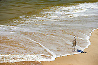 A heron stands on the beach on Dauphin Island, Alabama, a barrier island located three miles south of the mouth of Mobile Bay in the Gulf of Mexico. This island, which is approximately 14 miles long and less than two miles wide, appears to have fully recovered from the impact of Hurricane Katrina (2005) and the BP Deepwater Horizon Oil Spill in 2010. Both events greatly reduced tourism income (fewer people came to the island) and local business owners say many establishments went out of business. Today they say they're looking forward to a rebounding tourism business.